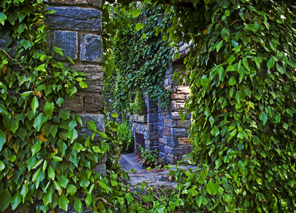 Shrubbery lines the roofless stone walls of the Ruin. (Courtesy of the Lyden family)