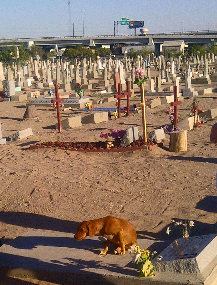 During a recent tour, the cemetery's visitors included a dog, who sought a cool place to rest.