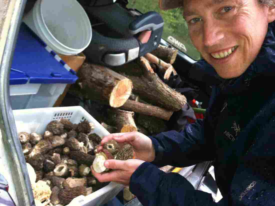 Langdon Cook shows off the morel and porcini mushrooms he's foraged and stored in the trunk of his car.