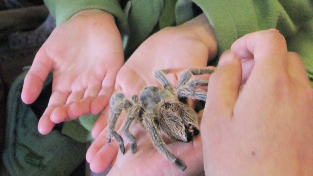 Community Science Workshops give low-income kids around California opportunities to learn about science firsthand — from holding spiders to building robots. (Amy Standen for NPR)