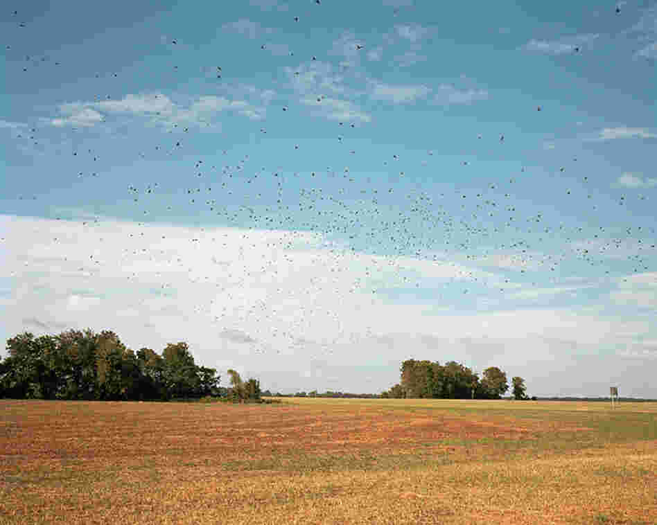 Birds in Flight, 2010