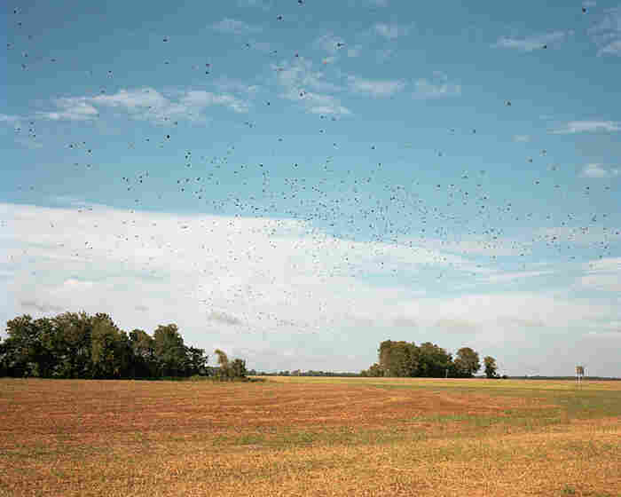 Birds in Flight, 2010
