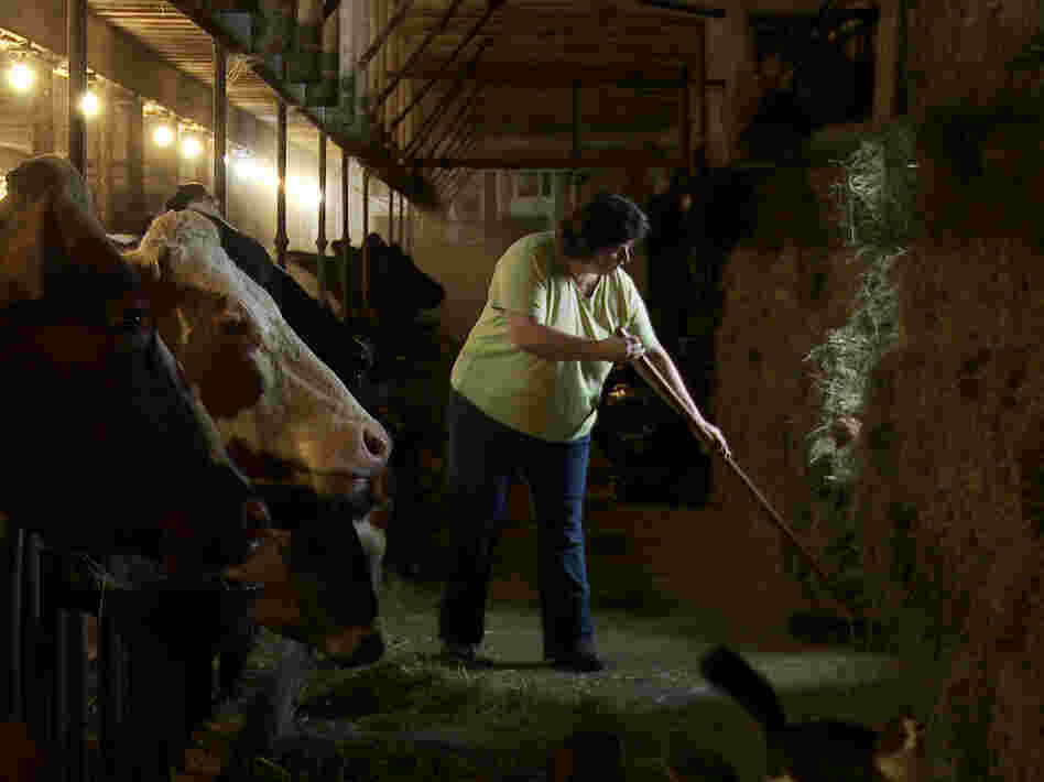 Laura Chase, a member of the MOOMilk dairy cooperative, sweeps her barn in a film still from documentary, Betting The Farm.