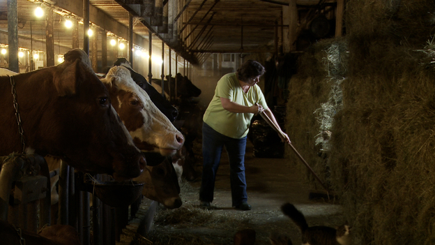 Laura Chase, a member of the MOOMilk dairy cooperative, sweeps her barn in a film still from documentary, Betting The Farm. (Pull-Start Pictures)