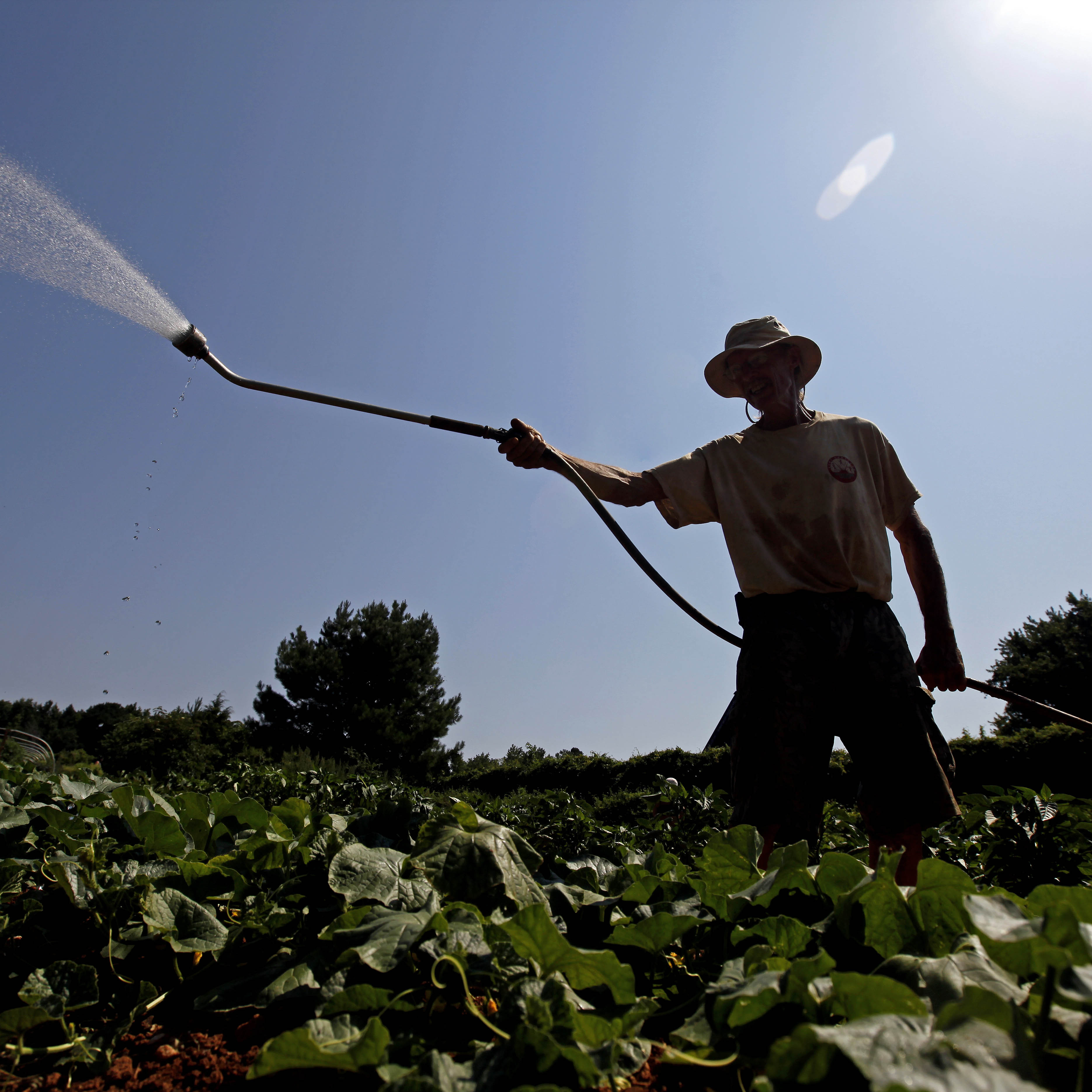 Doug Jones, owner of Piedmont Biofarm in Pittsboro, N.C., waters vegetables as temperatures in the South soar, Friday, June 29. Triple-digit temperatures are expected for several days in North Carolina.