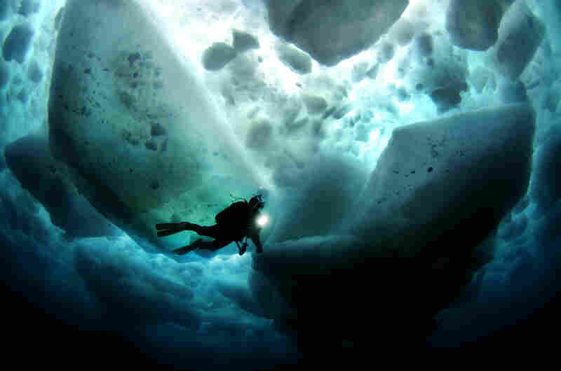 """A magical moment as tons of sea ice floats above while we explore the world beneath the waves."""
