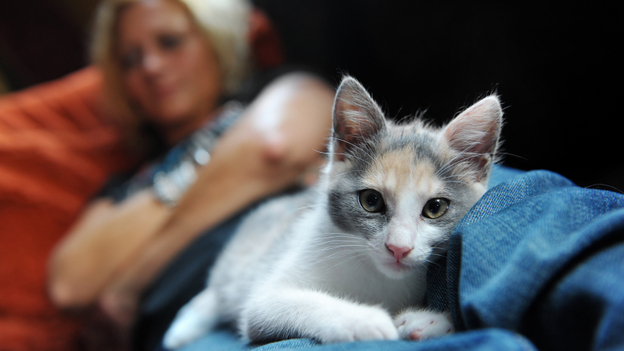 What's the link between cats and madness? (iStockphoto.com)