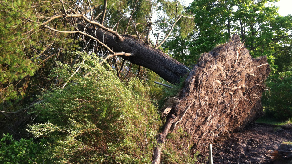 The weekend storms tore up a tree across the street from the West Virginia DOT division facility in Crawley. (NPR)