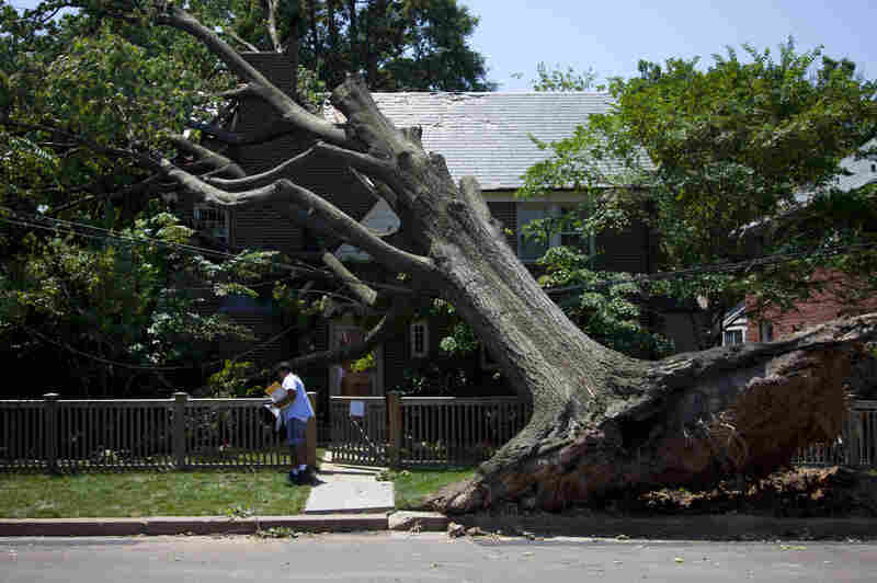 DERECHO: Letter carrier Giovanny Alvarez makes his rounds on Monday in Washington, D.C., which was still sawing and digging its way to recovery from the powerful storm that swept through Friday night.
