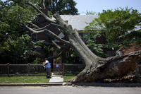 <strong>DERECHO:</strong> Letter carrier Giovanny Alvarez makes his rounds on Monday in Washington, D.C., which was still sawing and digging its way to recovery from the powerful storm that swept through Friday night.