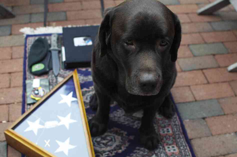 "Jason McCarthy, 32, GORUCK military gear: ""Java, my dog, Green Beret and Yarborough knife, Family scrapbook I had in Iraq, one-of-a-kind duct-tape wallet made by a friend, Java's finisher medal from the Chicago half marathon, grandfather's burial flag."""