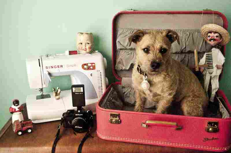 """Justin R. Swaby, 25, Los Angeles, architecture student: """"My dog, Rooster; Childhood toy truck; Vintage suitcase, a gift from my aunt; Nikon EM 35mm camera; Sewing machine; Baby doll head mug, a gift from a dear friend; Favorite gun-toting marionette; Small bird carved from bone, a gift from my boyfriend; Vintage porcelain black lady salt shaker."""""""