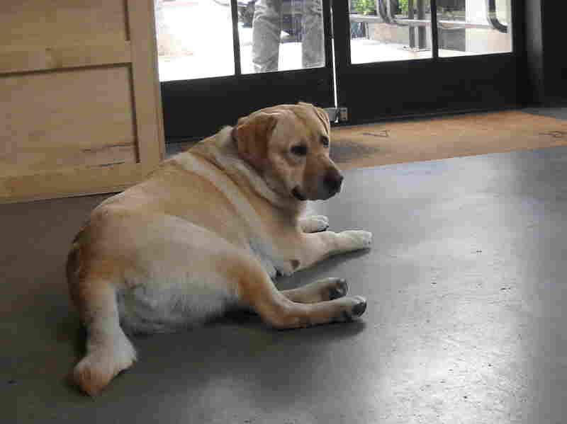 Tank relaxes in the lobby of RSA Films in Los Angeles. About a dozen dogs accompany their owners to the RSA office each day.