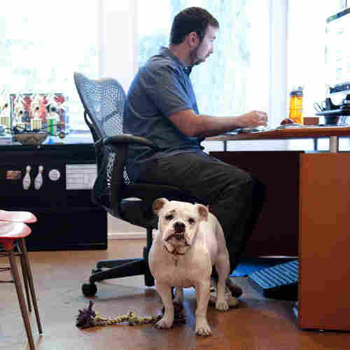 Office Stress Dogging You? Try Punching In With Fido