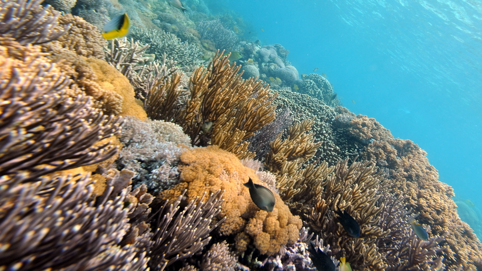 Fish swim by a colorful variety of coral near Indonesia's Komodo island. (AFP/Getty Images)