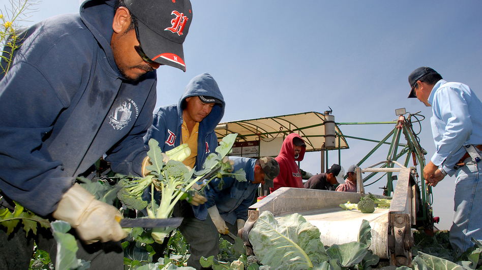 Agriculture is a key job sector in Yuma, Ariz., where the seasonal workforce and migrant labor tend to boost the unemployment rate. (AP)