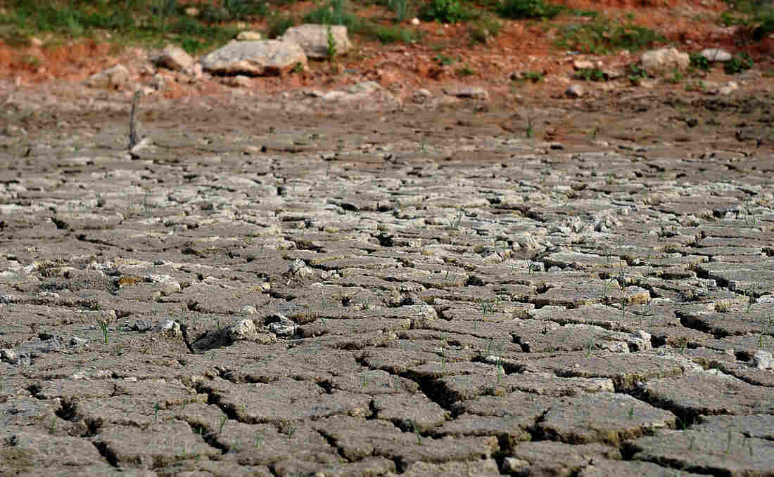 In this Aug. 2, 2011 file photo, the bottom of the pond at the Gene Howe Wildlife Management Area is nearly dried up in Amarillo, Texas. A devastating drought across Texas turned rivers into sand, creeks into mud, springs into mere trickles and lakes into large puddles.