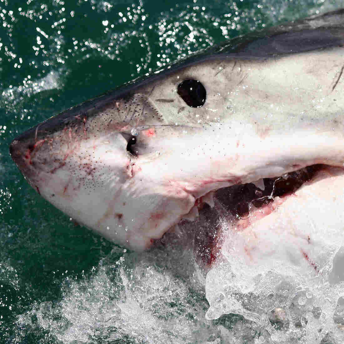 Five Fatal Shark Attacks Shock Australia