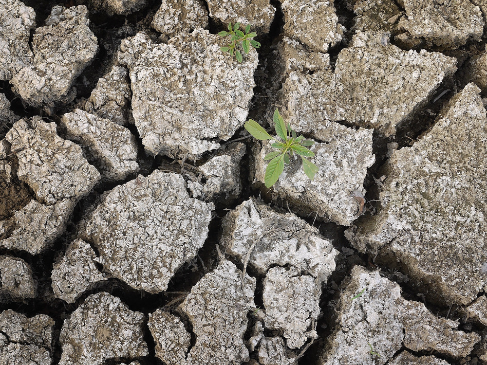 On Monday, a weed was growing through the dry earth at Marion Kujawa's pond, which he normally uses to water the cattle on his farm in Ashley, Ill. (Scott Olson/Getty Images)
