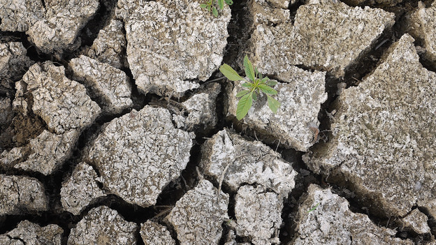 On Monday, a weed was growing through the dry earth at Marion Kujawa's pond, which he normally uses to water the cattle on his farm in Ashley, Ill. (Getty Images)