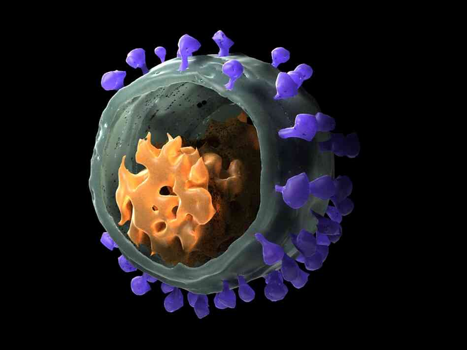 HIV is thought to originate from simian immunodeficiency virus, also known as the African Green Monkey virus. As for HIV, the genes of SIV are encased in a shell with spikes that help it in