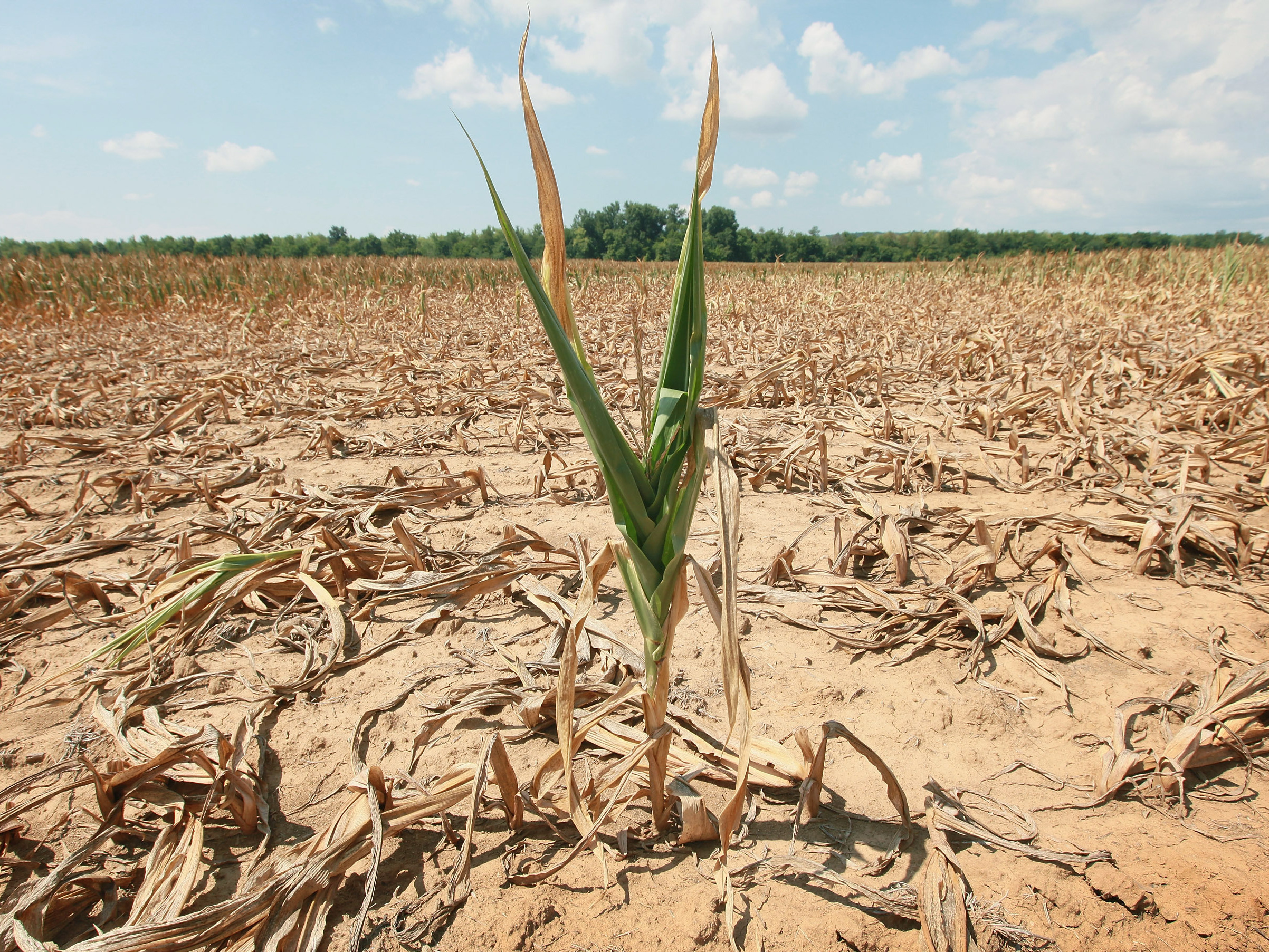 Npr Emergency >> Drought Disasters Declared In More Counties; 1,297 Affected So Far | NCPR News