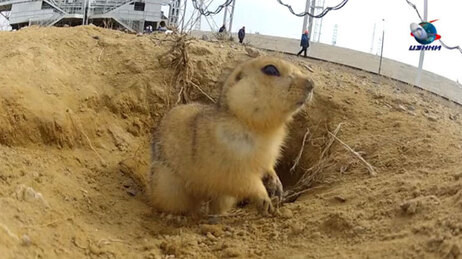 Gopher at the cosmodrome.