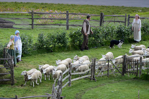 Sheep are led onto the field during the ceremonies.