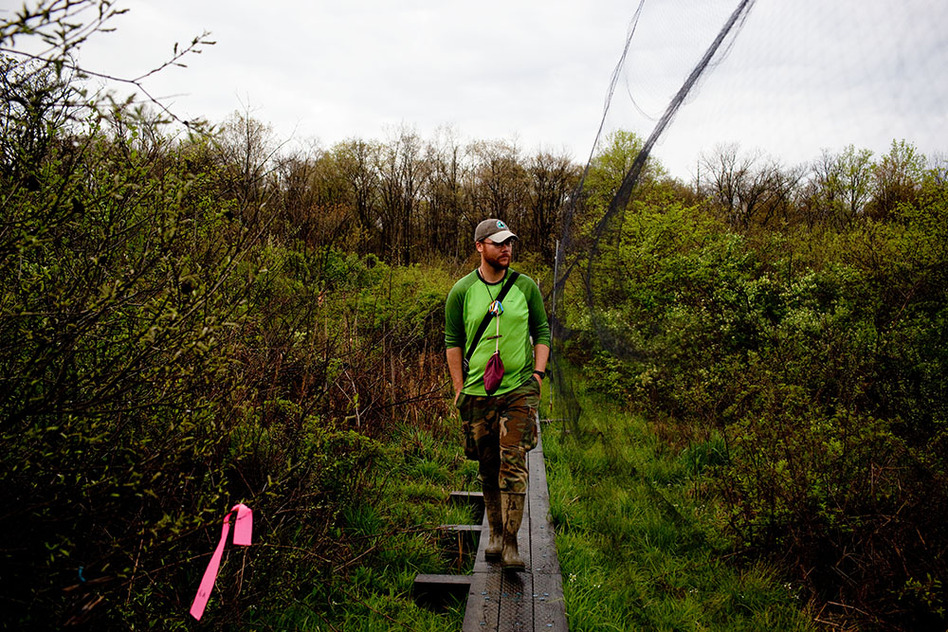Luke DeGroote, the banding program coordinator, looks for birds trapped in fine-meshed mist nets. Nearly 70 nets cover a 24.7-acre area at Powdermill; they need to be checked every 30 to 40 minutes. (NPR)