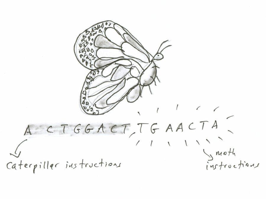 Essay On M Butterfly