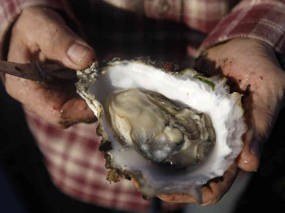 Scientists blame higher levels of carbon dioxide in Pacific Ocean waters caused by global warming for the failure of oyster seeds to thrive in hatcheries.