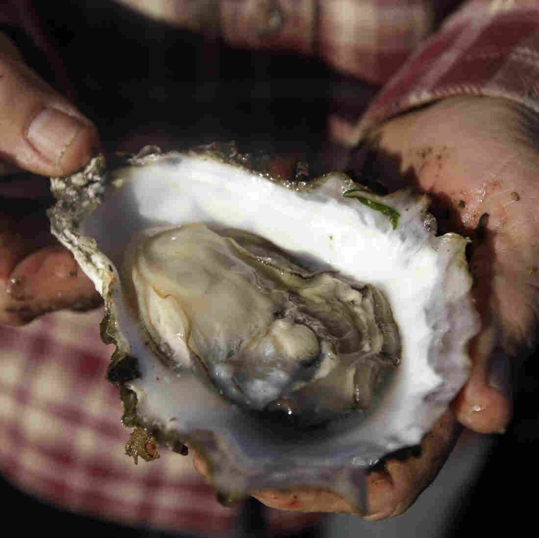 How Climate Change Is Changing The Oyster Business