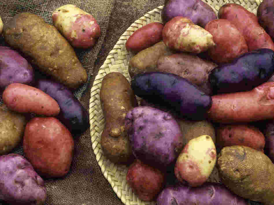 Potatoes come in all colors, like these Red Erik, Snowball, Cariboo, Purple Peruvian, Caribe and French Red varieties.