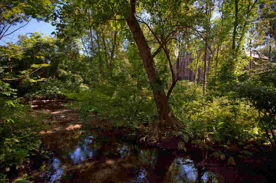 On Vassar's campus, this riparian, bird-friendly habitat is the future site of the Bridge Building designed by Maxwell and Ennead Architects.