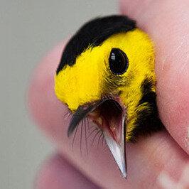 Wind turbines kill up to 39 million birds a year