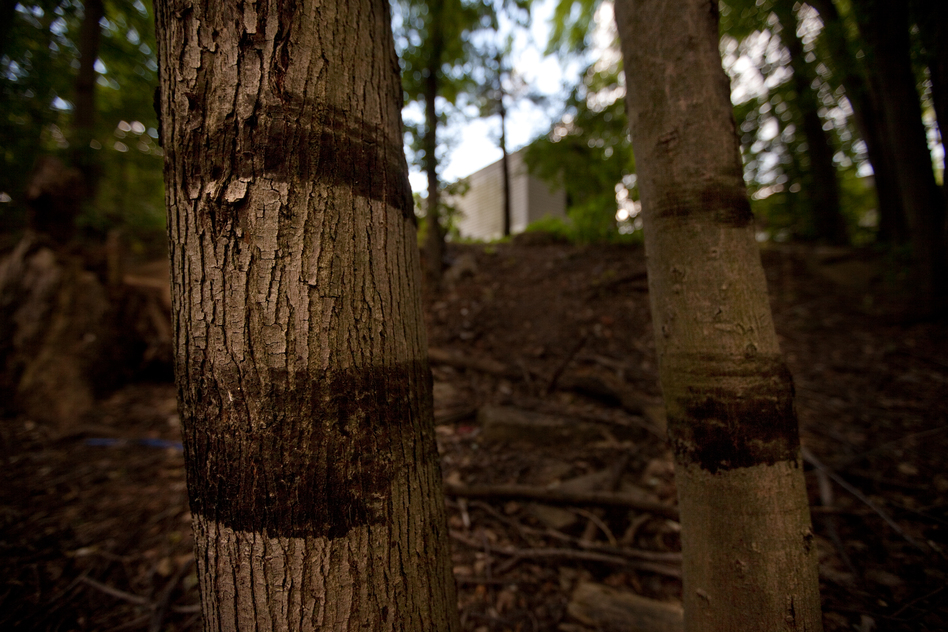 Oil rings on trees only 50 feet from the nearest home show the height of the oil and water, and its proximity to the Baker Estates Mobile Home Park in Battle Creek. (NPR)