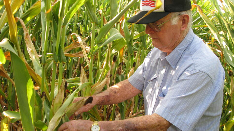 Charles Hildenbrand surveys the family's corn crop outside Thawville, Ill. He doesn't remember much from the Dust Bowl days, but says technology has saved what little corn the farm does have this year. (NPR)