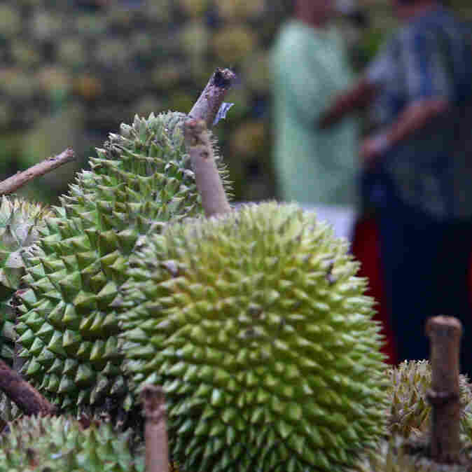 Purists Sniff As Stink-Free Durian Fruit Seeks A Fan Base