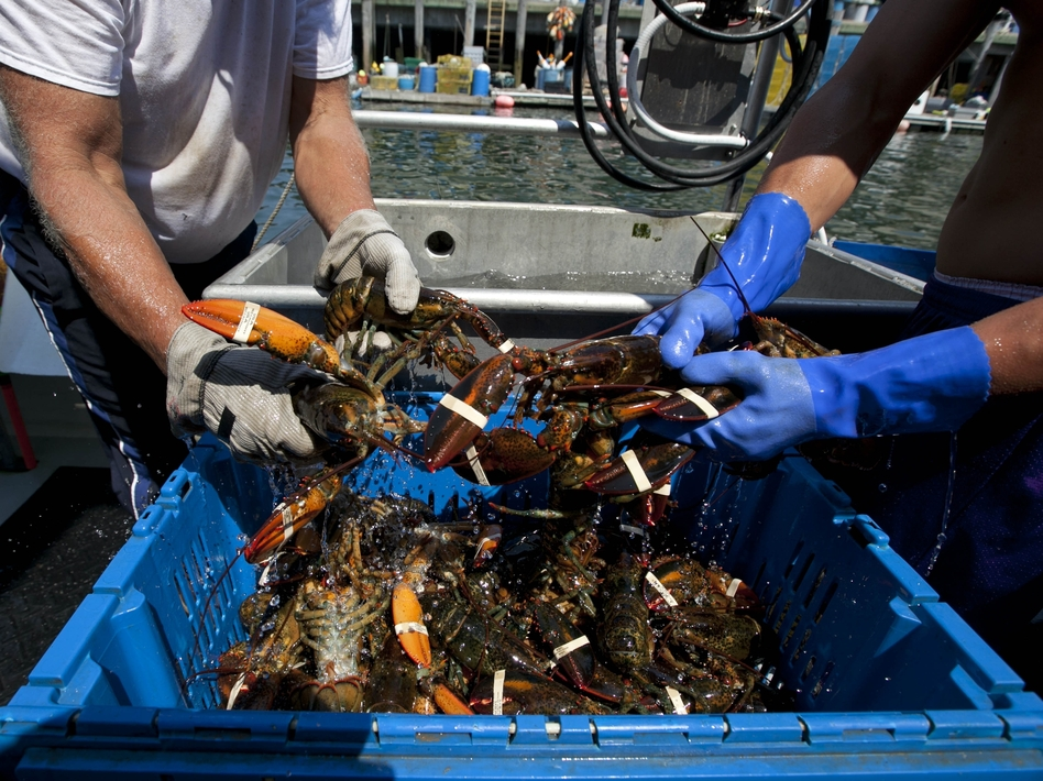 Blockades set up by lobster trappers in Canada have disrupted Maine's lobster business.