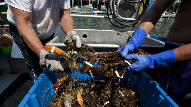 Blockades set up by lobster trappers in Canada have disrupted Maine's lobster business. (AP)