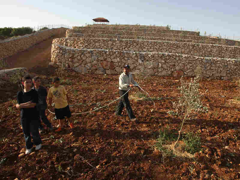 Palestinian Amer Dhabreh waters trees on his land in the village of Ein Yabrud, near the West Bank city of Ramallah, on June 10. Dhabreh believes that rehabilitating his land, which falls in Area C, will protect it from Jewish settlements and Israeli restrictions.