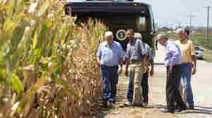 President Obama and Agriculture Secretary Tom Vilsack (second from right) inspect drought-damaged corn on the McIntosh farm in Missouri Valley, Iowa.