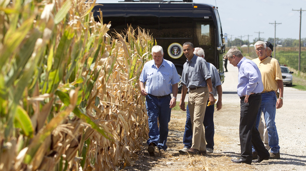 President Obama and Agriculture Secretary Tom Vilsack (second from right) inspect drought-damaged corn on the McIntosh farm in Missouri Valley, Iowa. (AP)