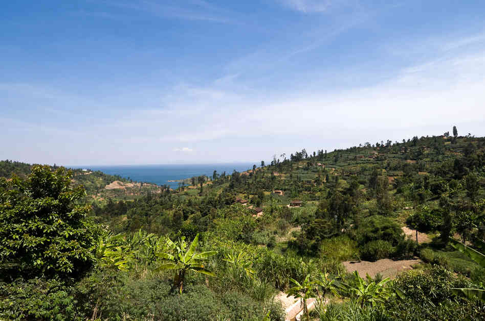 Rwanda has endless rolling hills, spotted with small family coffee farms. The altitude is about 5,600 feet near the shores of Lake Kivu in western Rwanda, making these cliffs an ideal place to grow premium coffee beans.