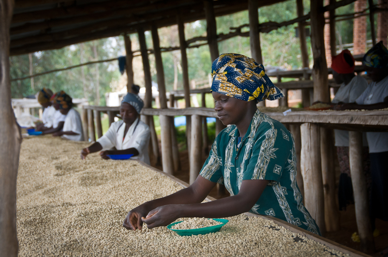 Rwandan Coffee Farmers Turn Premium Beans Into Harvest ...