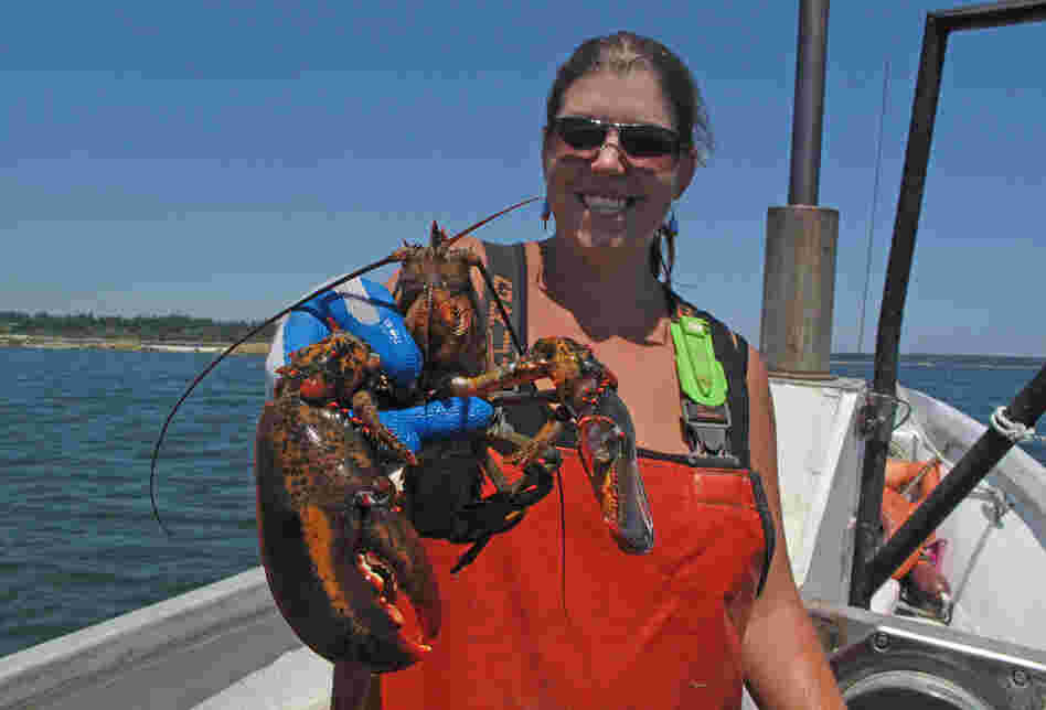 Lobsterman Genevieve Kurilec holds a lobster caught while fishing along Deer Isle, Maine. Kurilec says more women are beginning to captain their own lobster boats.