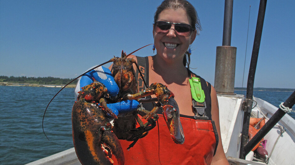 Lobsterman Genevieve Kurilec holds a lobster caught while fishing along Deer Isle, Maine. Kurilec says more women are beginning to captain their own lobster boats. (NPR)