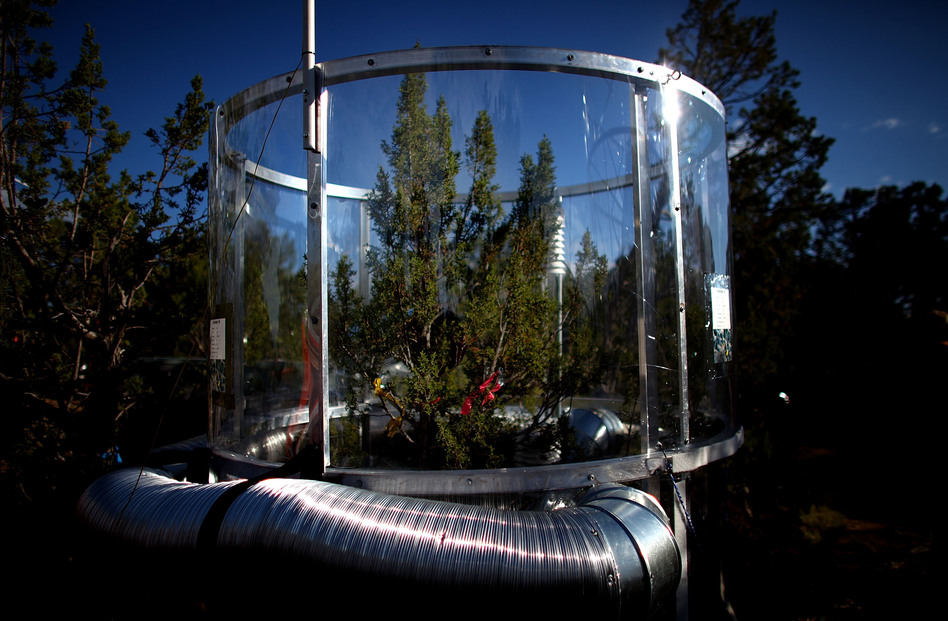 The temperature inside this tree chamber is about 7 degrees hotter than outside — roughly the increase predicted by computer models of climate change over the next 80 years or so. (NPR)