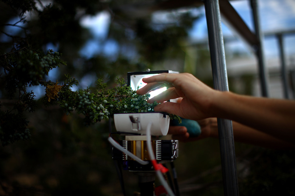 Researchers study every aspect of the tree as it fails under intense heat and lack of water. This device monitors the tree's respiration. (NPR)