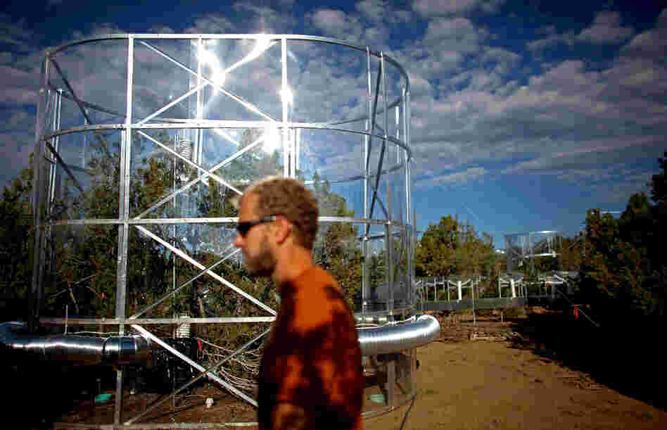 Powers walks past a tree chamber. Researchers say drought-stressed trees appear to start consuming their own carbon stores.